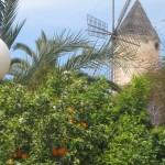 Palma de Mallorc a 013