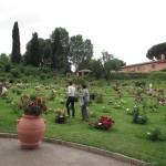 Rome1 035